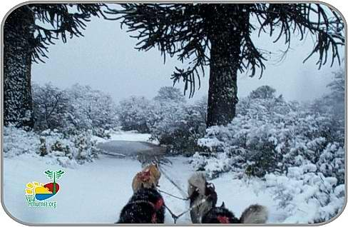 Villa Pehuenia: sleds pulled by dogs